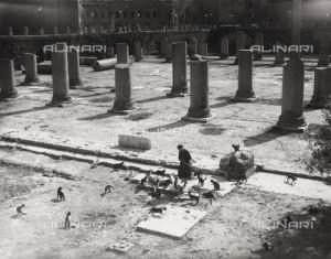 LLA-F-00R406-0000: Gattara nella Basilica Ulpia, Foro Romano, Roma, 1940-1950 ca., Archivio Leoni / Archivi Alinari